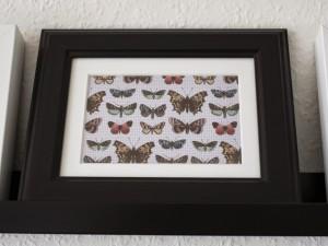 SchmetterlingsbildJPG
